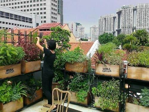 gem residences edible-garden